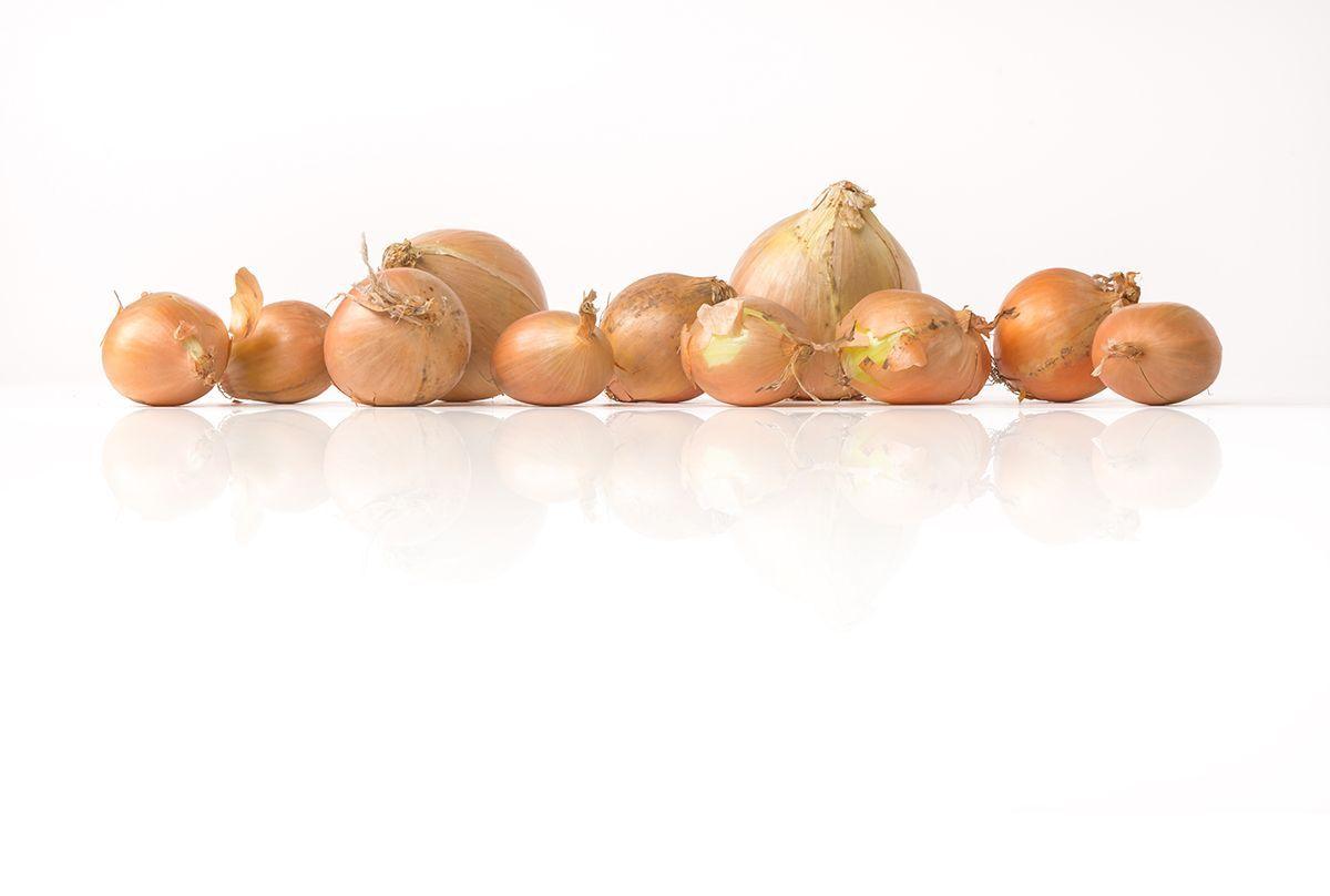 Onion-bedrijfsrep-2